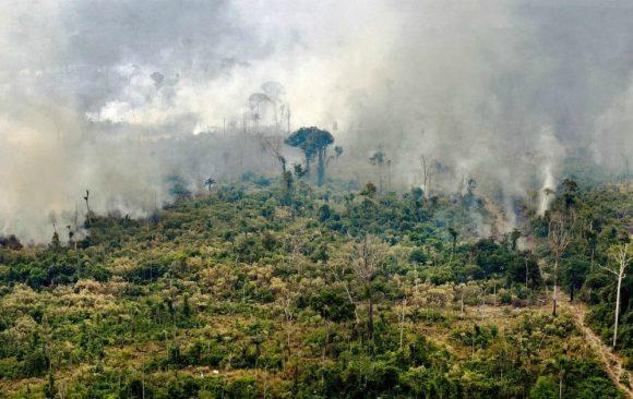 Papa Francesco: salvare la foresta amazzonica